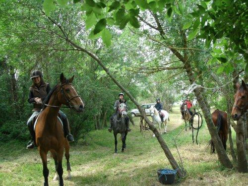 Les chevaux de Camp Julio à St Marcel d