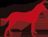 Cyno Pro Aude- Education canine toutes races à St Marcel dans l'Aude (11)